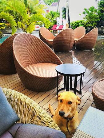 Dog Inside Ocean Villa Mauritius