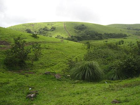 Super green grasslands of Kerala