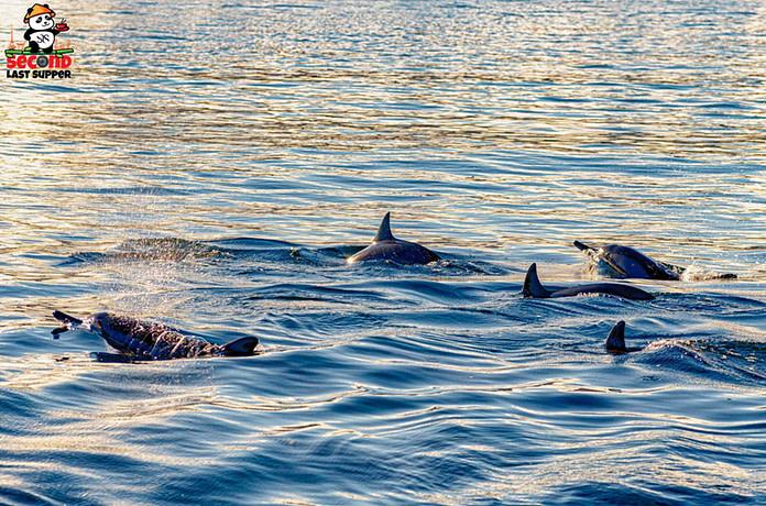 Dolphin spotting at Tamarin Beach Mauritius